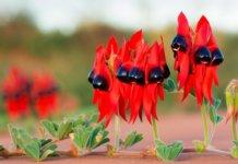 Szokatlan virágok