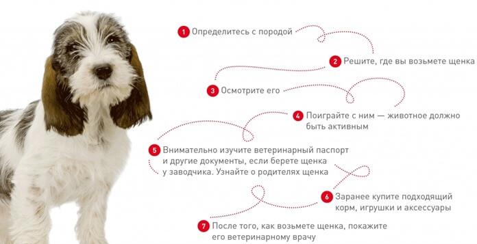 Hogyan válasszunk őrfajtás kiskutyát